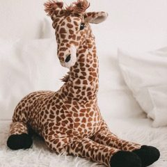 Giraffenklasse
